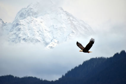 video celebrates what would have been 26th alaska bald